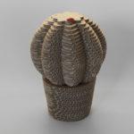 Cactus_Palla1